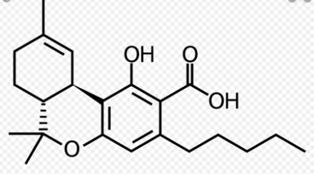 thca – tetrahydrocannabinolic acid