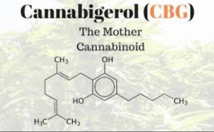 cbg – cannabigerol