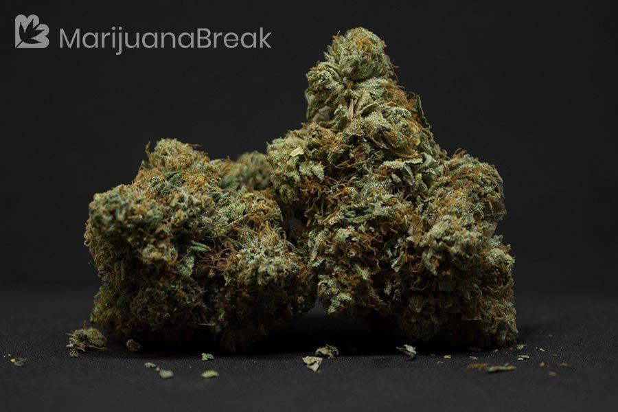 newest weed strains