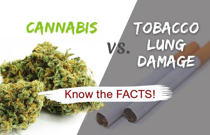cannabis vs tobacco