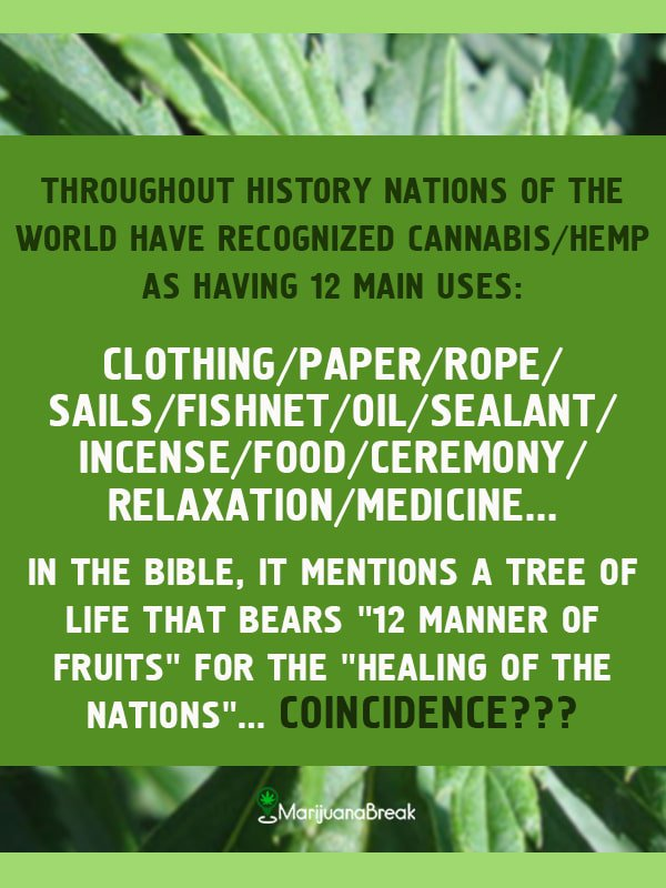 Here's How Hemp Can 'Save The Trees'