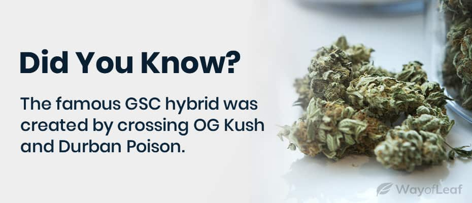 consider growing gsc using the sea of green (sog) method