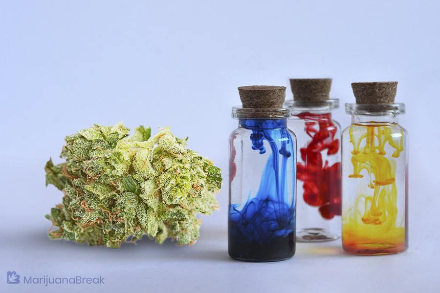 love potion strain