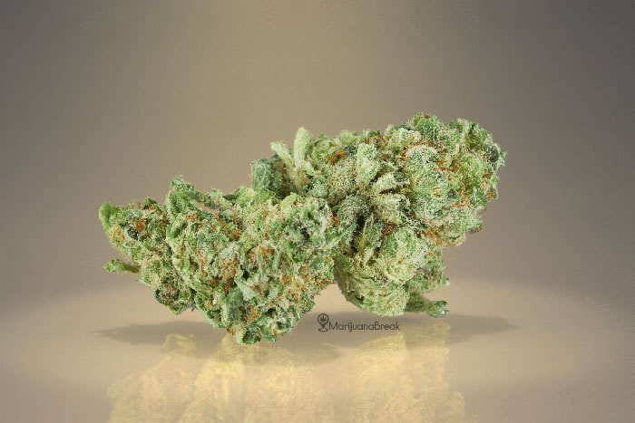 vanilla kush cannabis strain