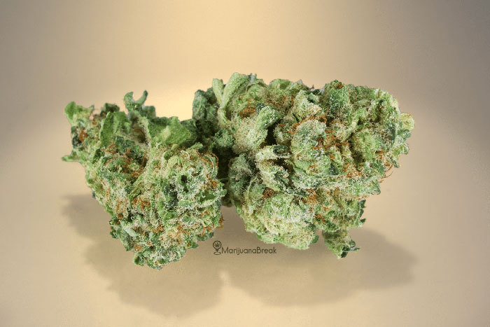Vanilla Kush Strain Review