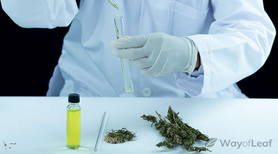 research-on-cannabis-as-a-potential-treatment-option-for-autism