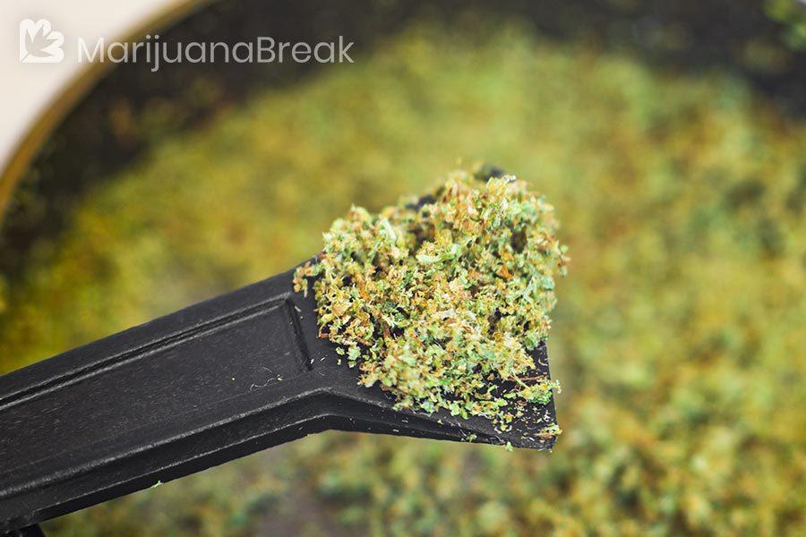 kief weed