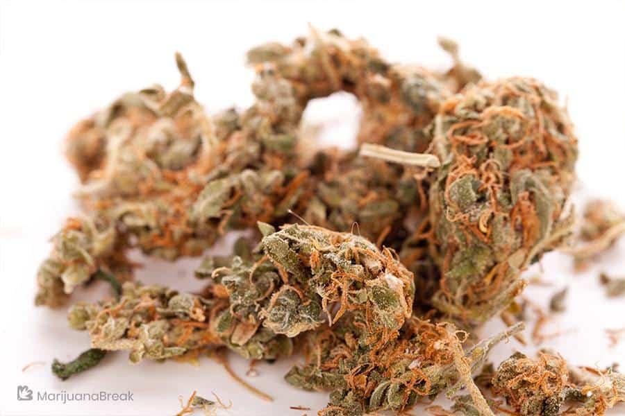 mid grade marijuana
