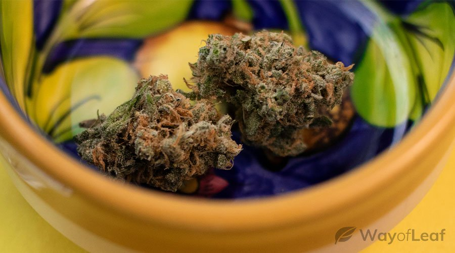 cannabis-strains-for-epilepsy