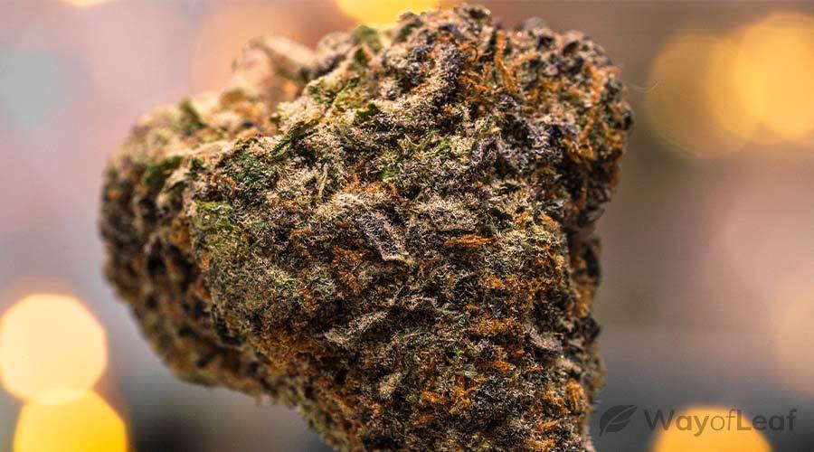 best-cannabis-strains-for-seizures