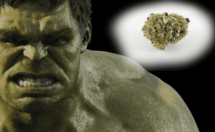Bruce Banner Marijuana Strain (Our 2020 Full Review)