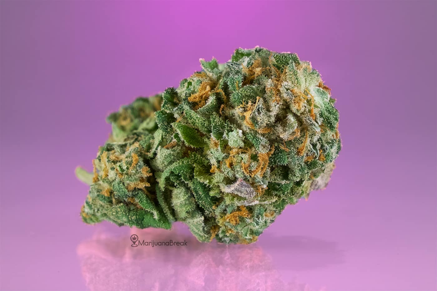 tips for growing bubble gum cannabis