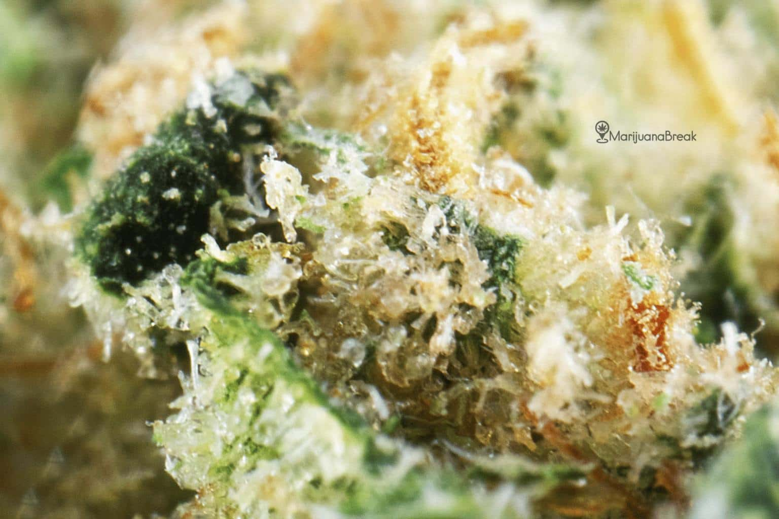 Chemdawg Aroma, Flavor, Appearance