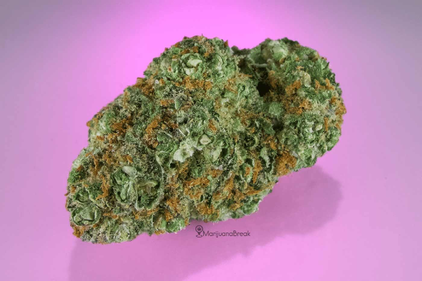 Cinderella Strain Review