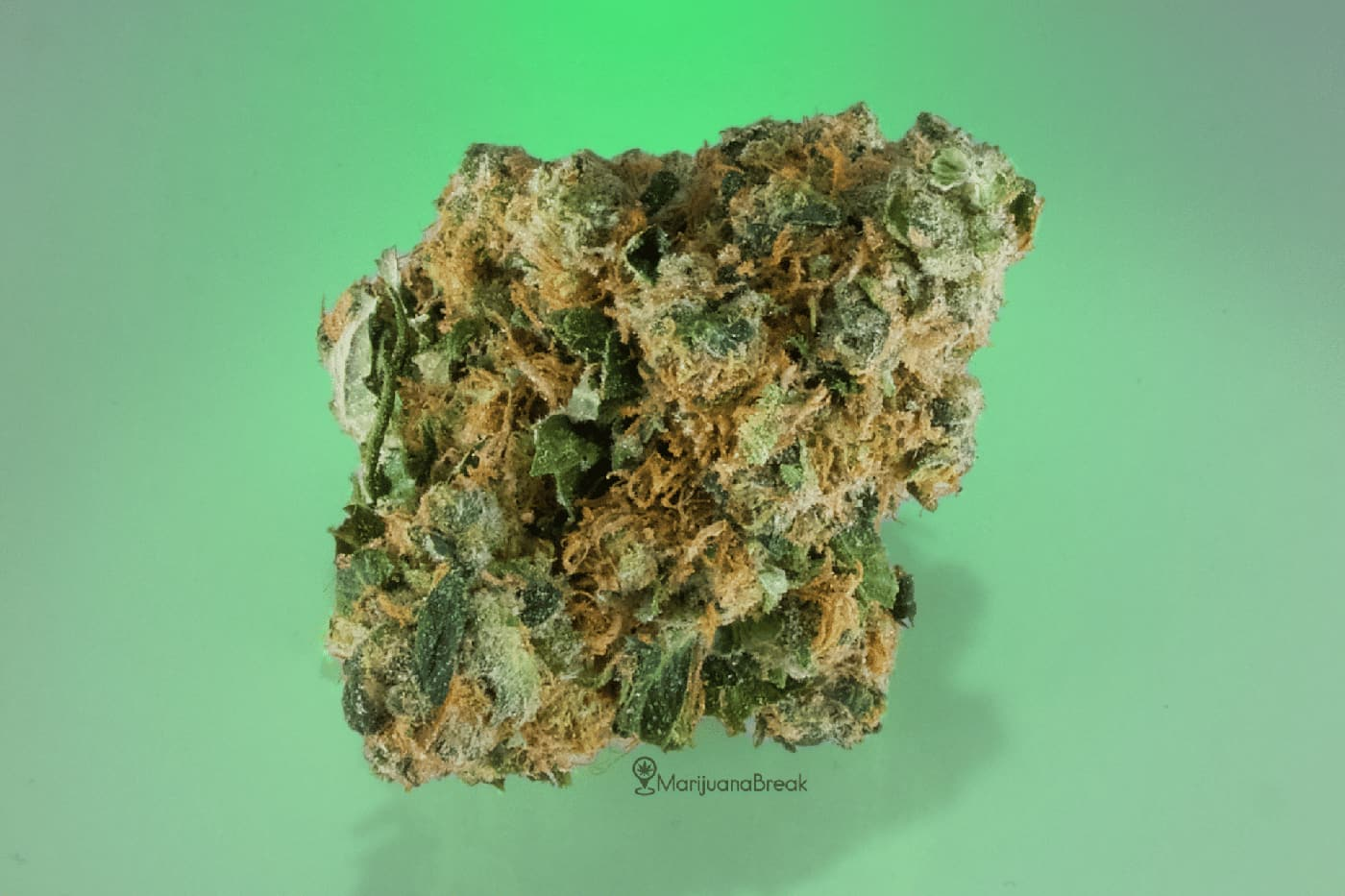 Headband (The Brain Fog Marijuana Strain)