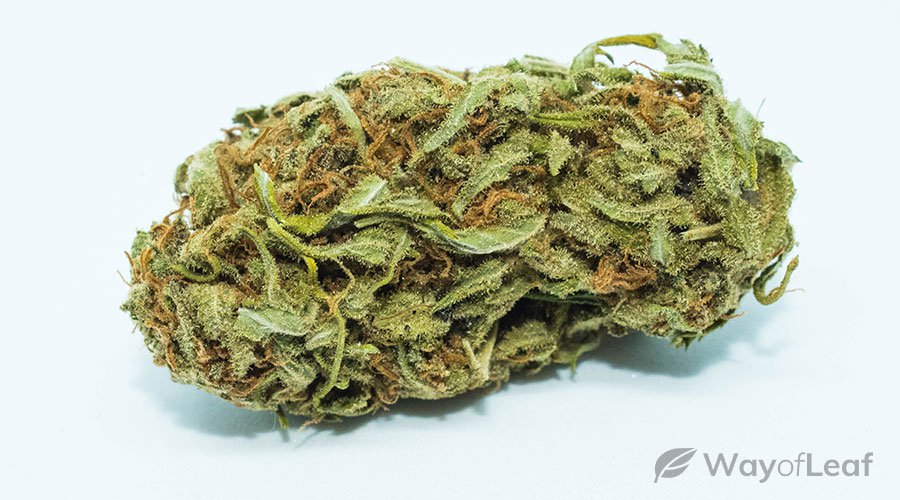 best-strain-for-adhd