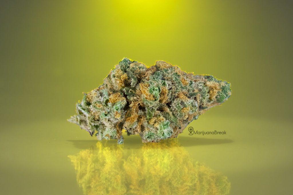 growing lemon skunk marijuana