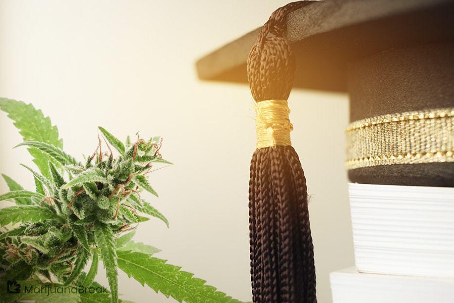 cannabis degree programs