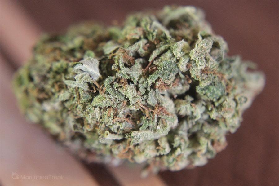 sour berry blue strain