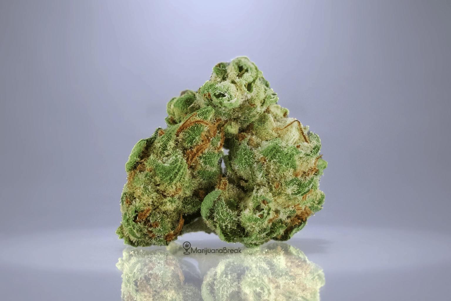 Moonshine Cannabis Strain Review