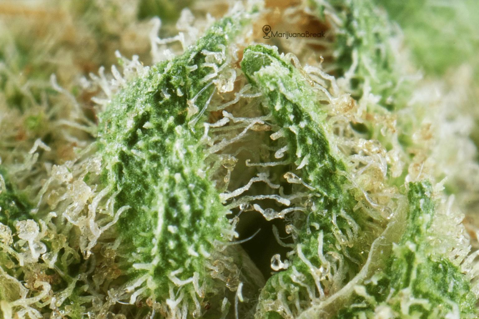 MoonShine Cannabis