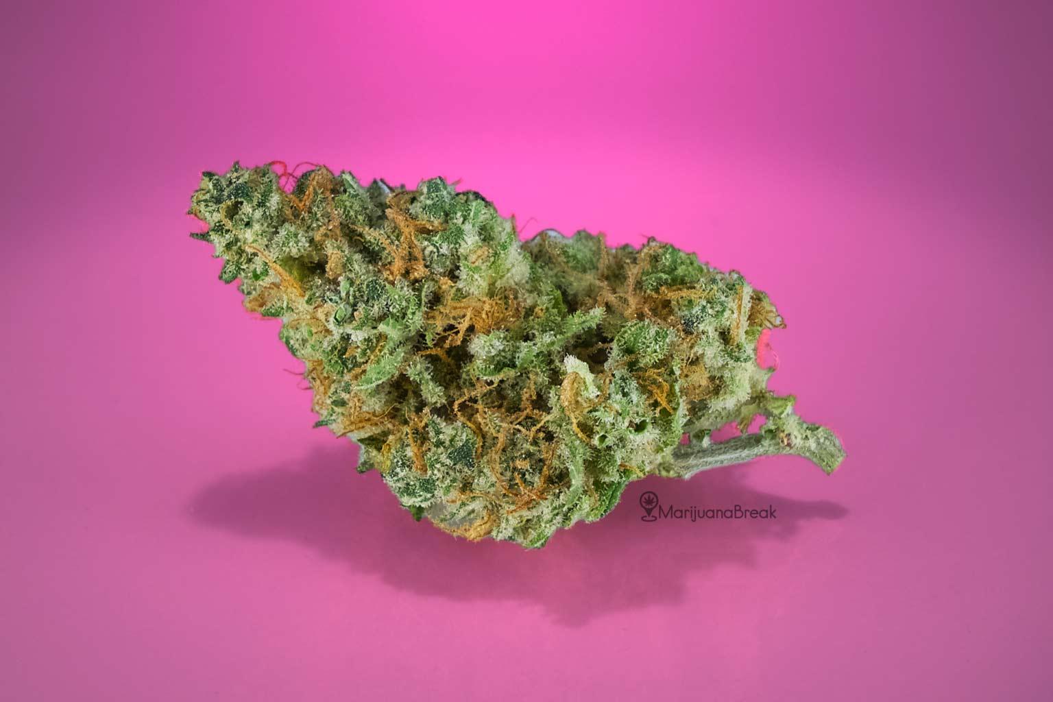 Sweet Tooth Cannabis Strain