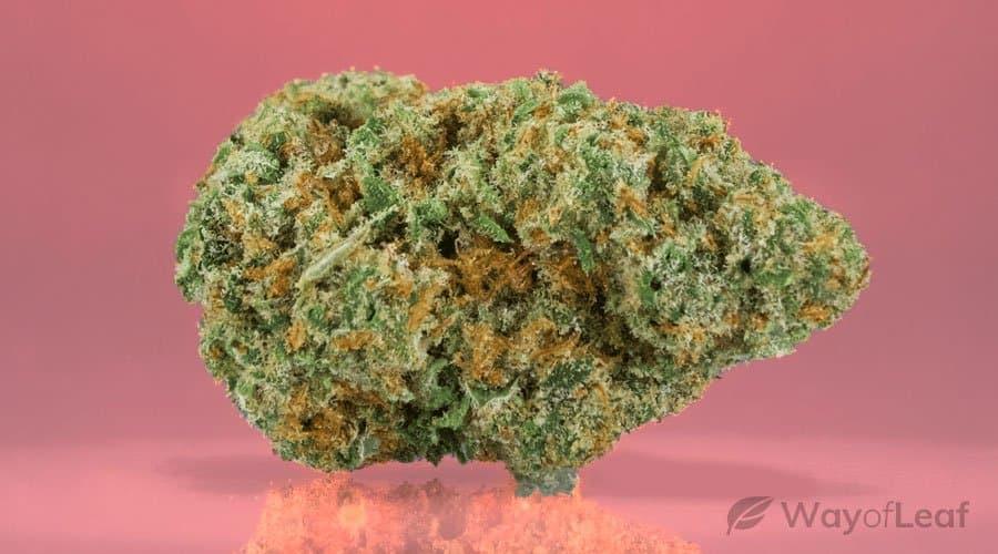 ADCD Cannabis Strain