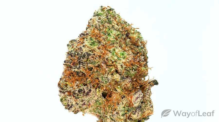 new-strains-of-marijuana