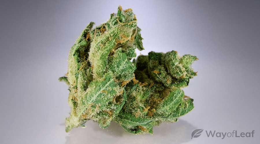 multiple-sclerosis-cannabis