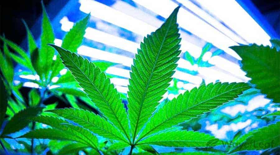 how-much-does-it-cost-to-grow-weed
