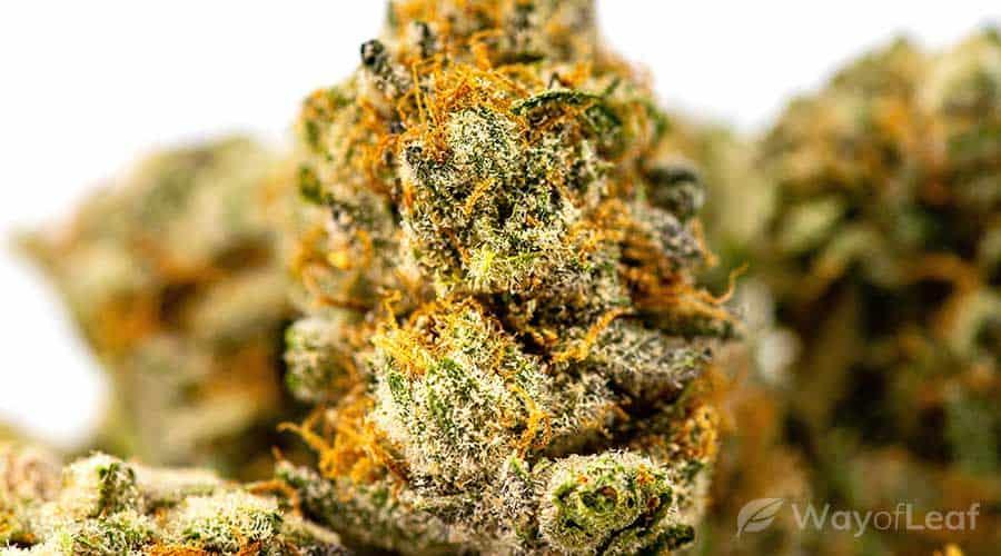 cannabis-and-crohn's