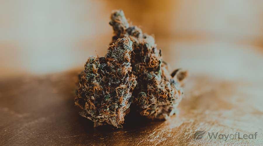 marijuana-crohn's-disease