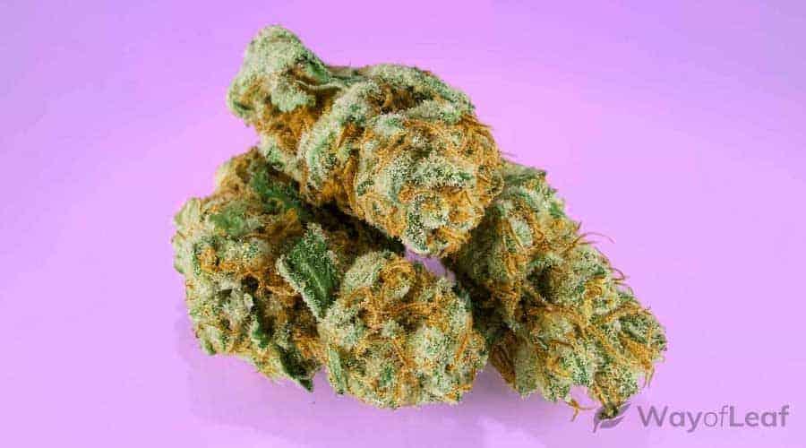 hindu-kush-cannabis-strain