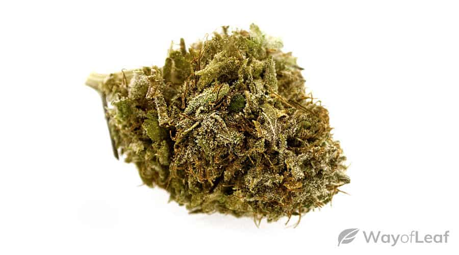 wol-article-pic-tip-3-hindu-kush-growing-techniques