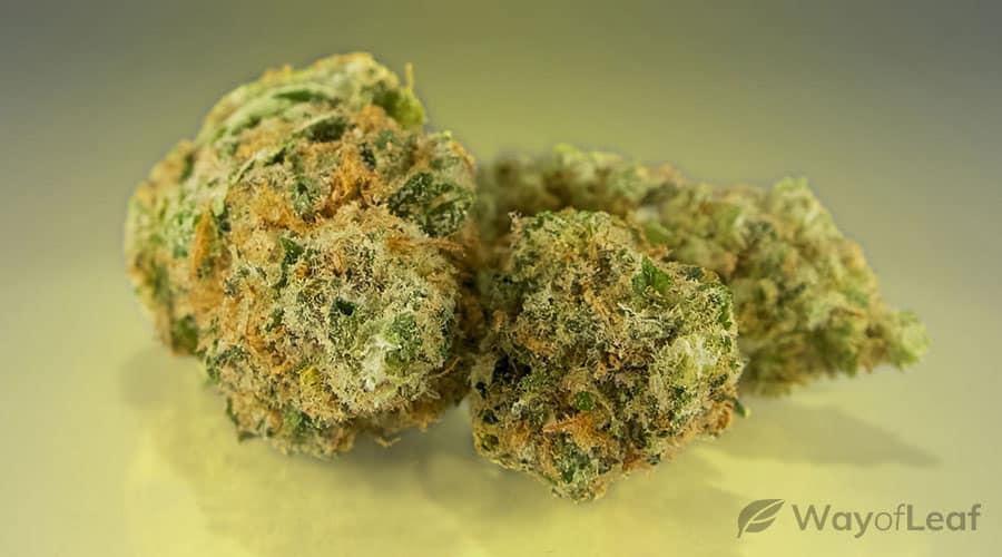 what-is-og-kush-cannabis