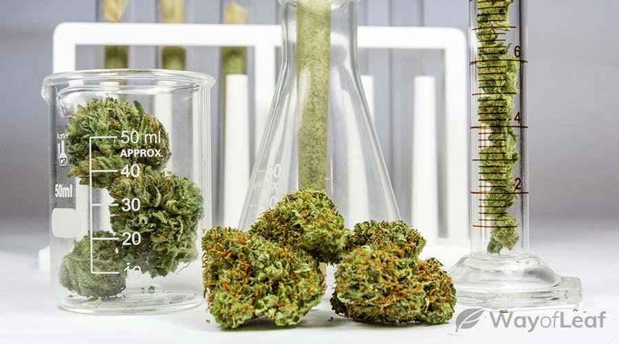 best-marijuana-strains-shingles
