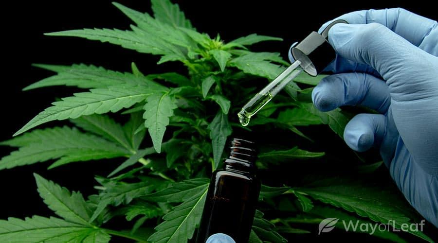 medical benefits of bruce banner marijuana