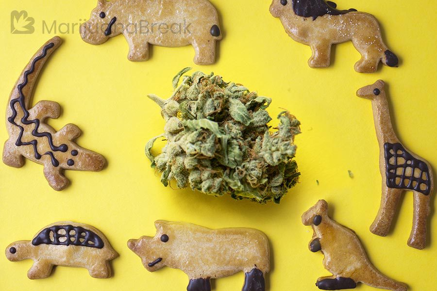 animal cookies strain