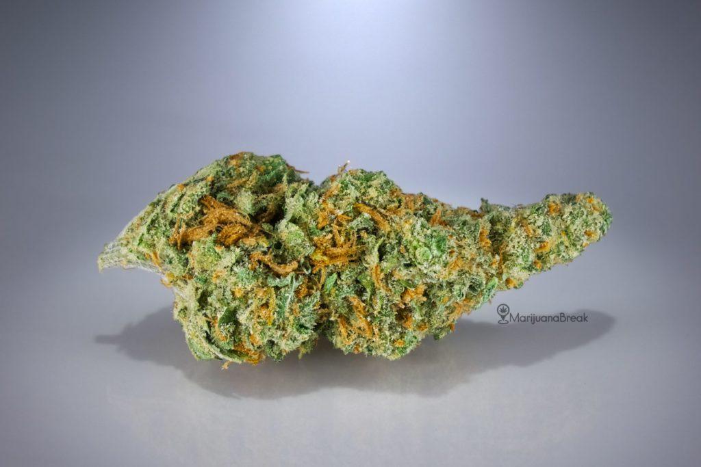 black jack cannabis