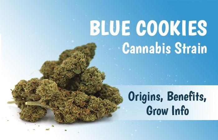 Blue Cookies Cannabis Strain Review