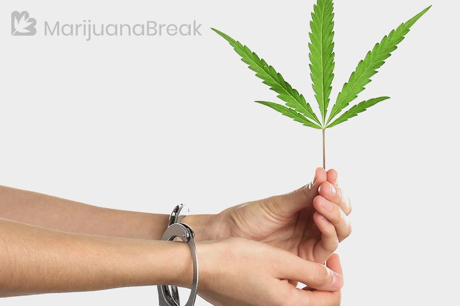 why are marijuana arrests increasing again?