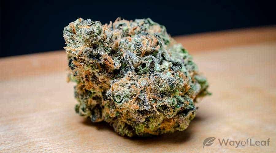 key-lime-pie-cannabis-strain