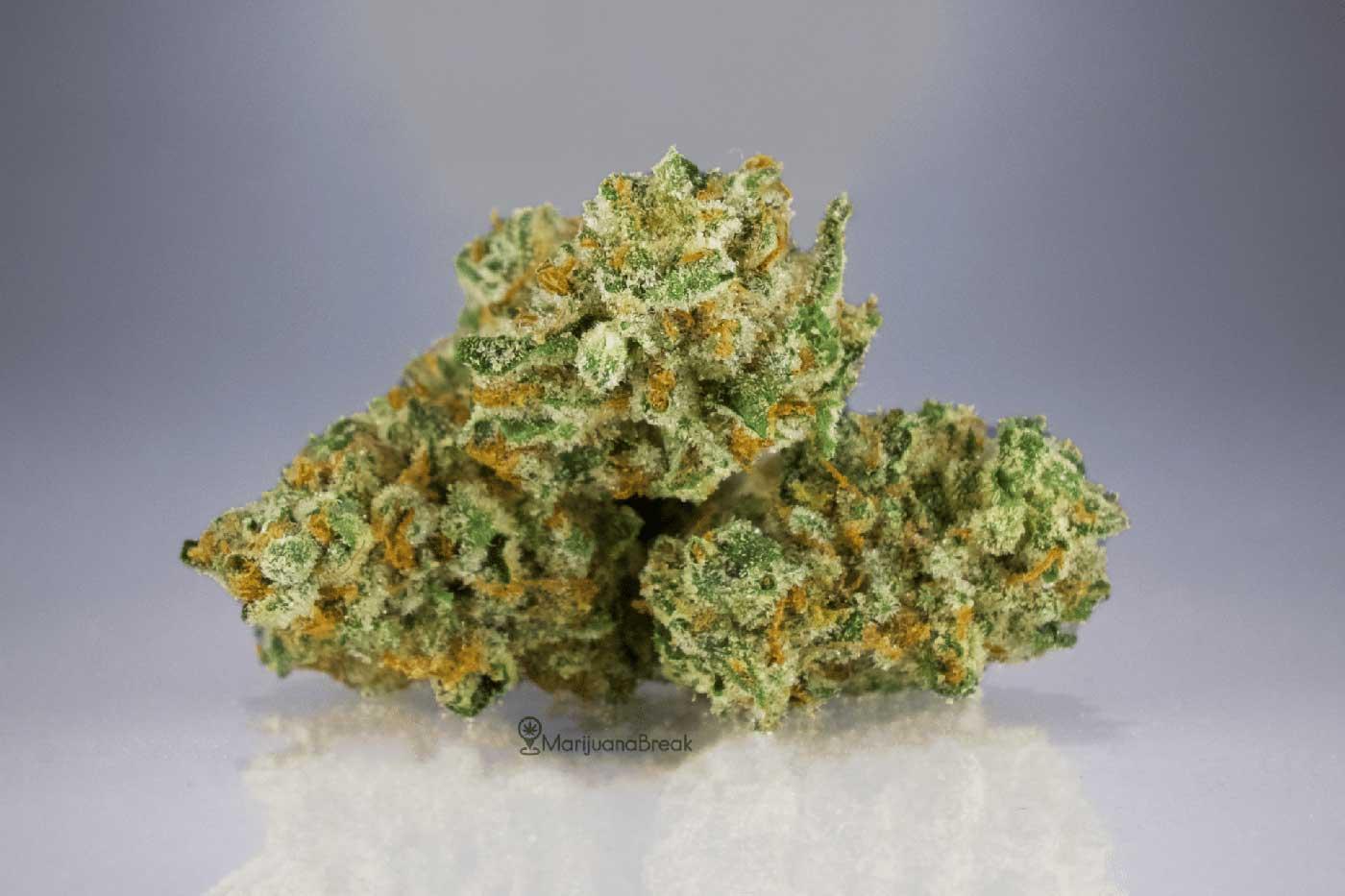 Ghost Train Haze Cannabis Strain