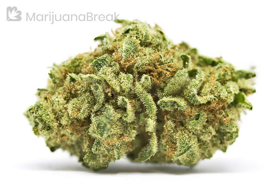best cannabis strain for diabetes