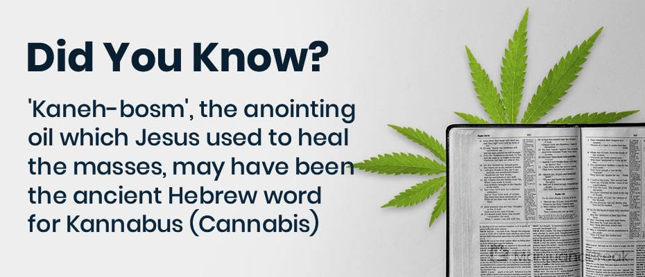 marijuana in the bible