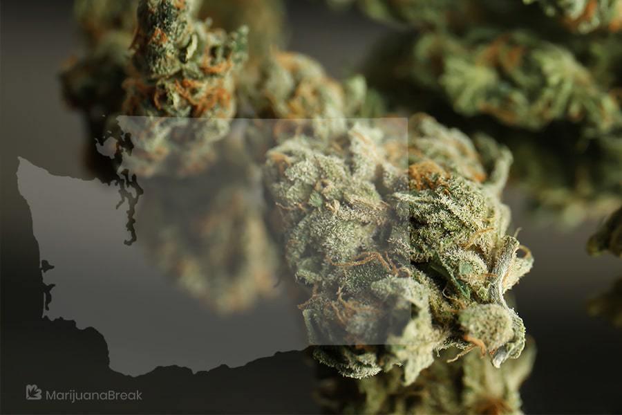 marijuana co op