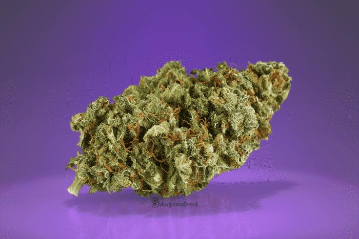 purple kush strain review