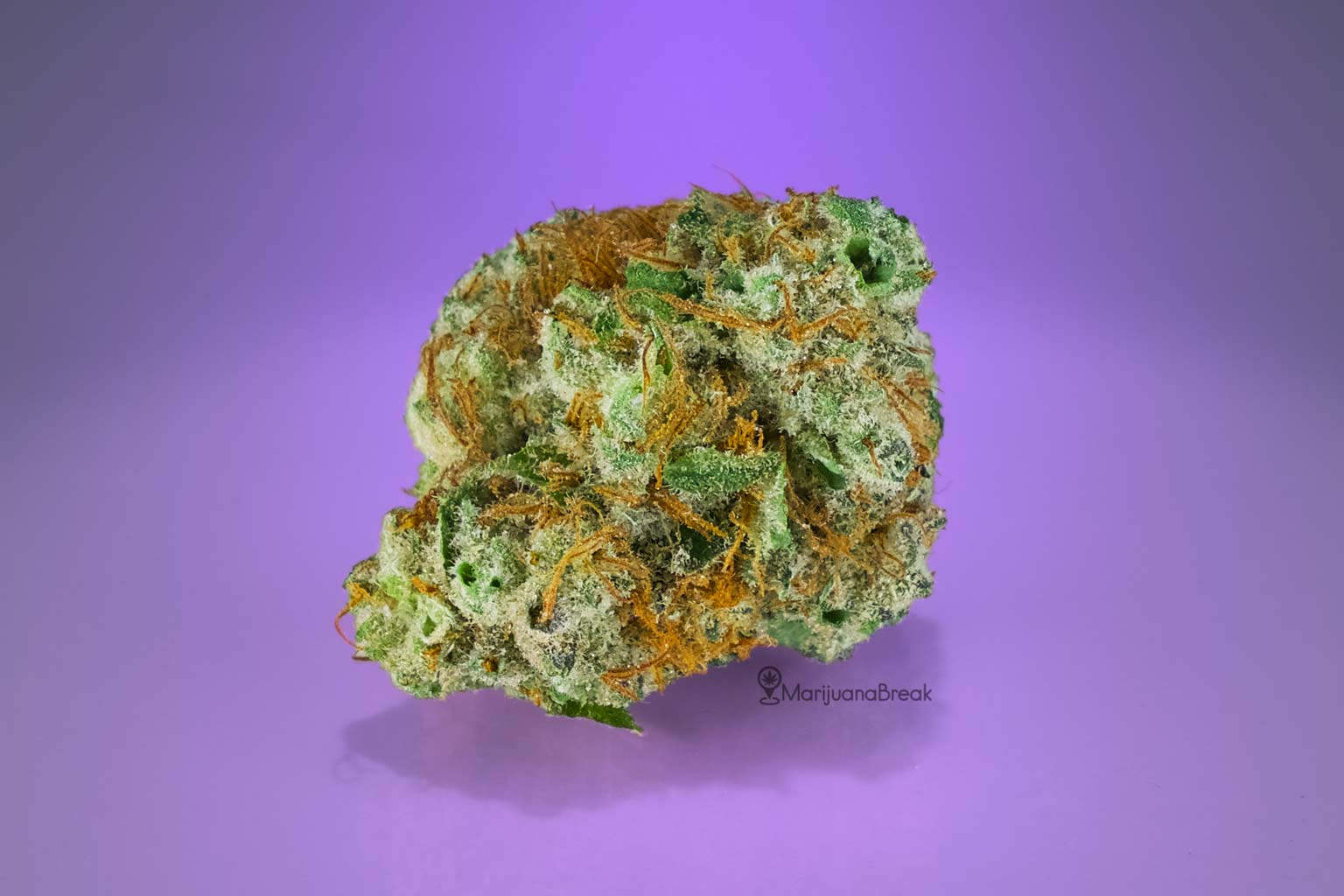 shiva skunk cannabis strain