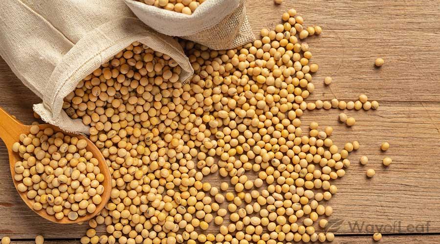 hemp-seeds-vs-flax-seeds