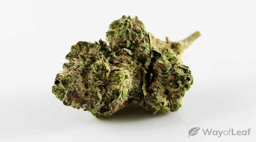 wol-article-pic-larry-og-cannabis-strain-grow-info